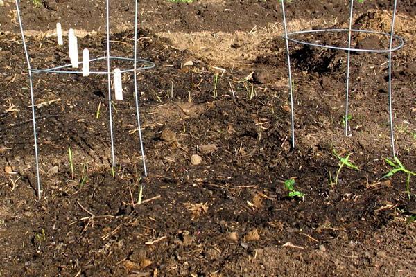 Our Topsoil makes a beautiful garden